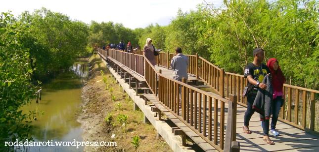 Ekowisata Mangrove Wonorejo Surabaya Roda Dan Roti