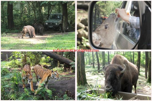 taman safari pandaan kasihmakan binatang