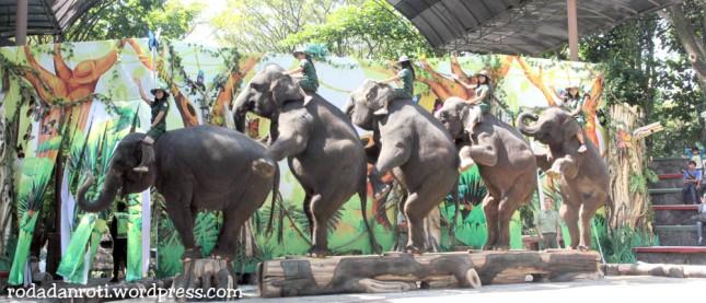 taman safari show gajah
