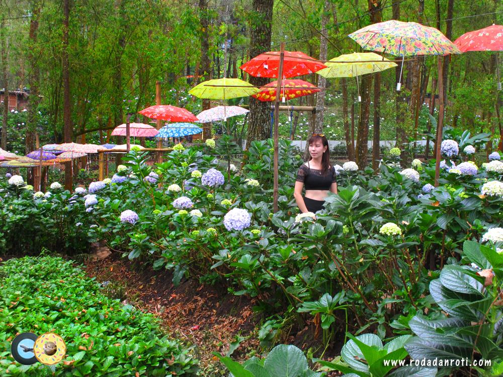 Kampung Indian Taman Bunga Pagupon Camp Coban Talun Batu Roda